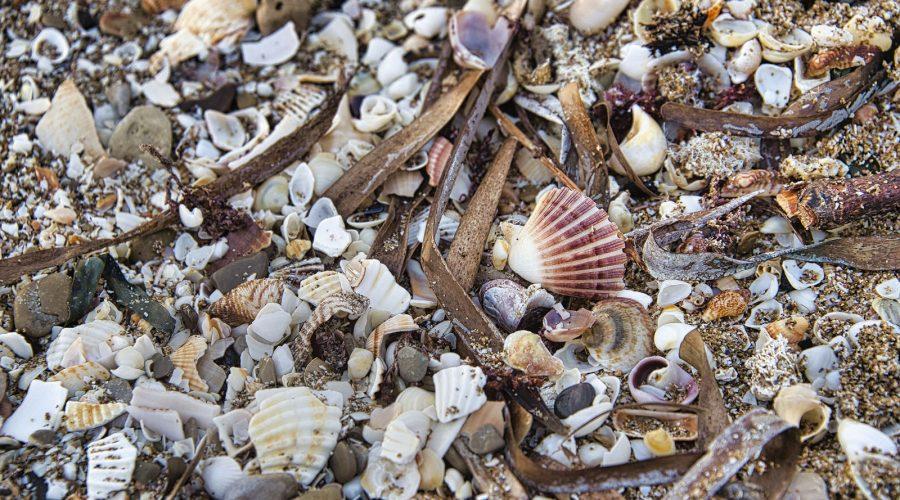Coquillages sur la plage à Banyuls