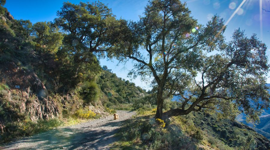 Randonnée en Pays Catalan