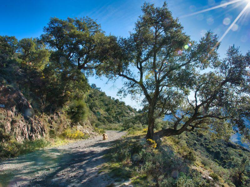 Randonnée pédestre Banyuls
