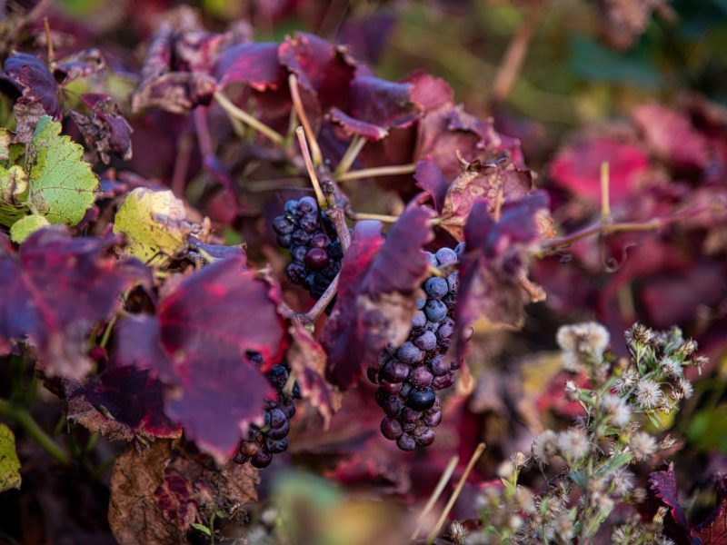 Vin de Banyuls