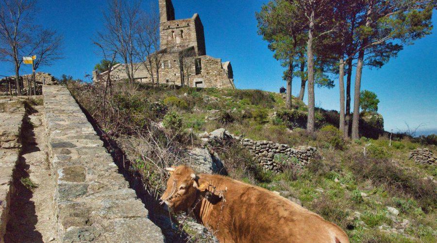 Animaux dans la nature en Espagne