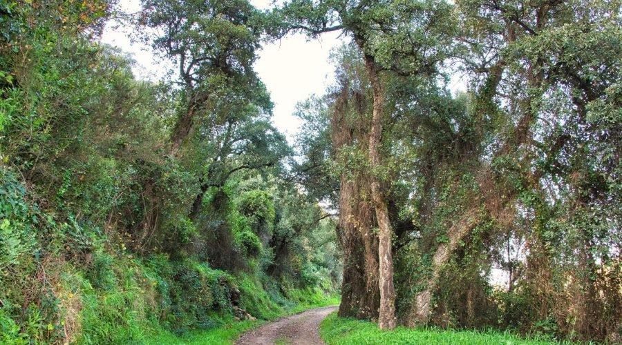 Randonnée pédestre à Banyuls-sur-Mer
