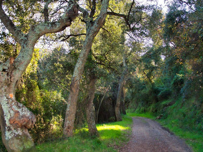 Randonnée en forêt en Catalogne