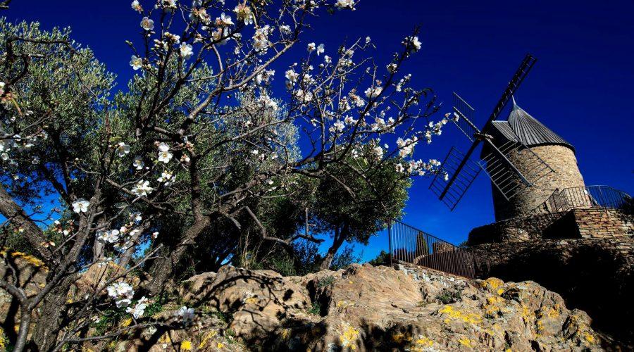 Moulin à vent Collioure