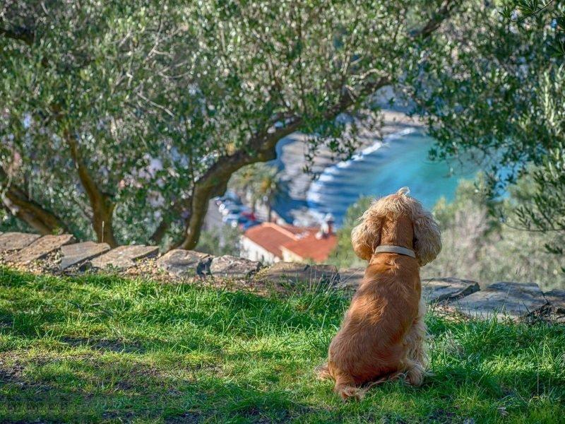 Petit chien accepté au bord de la mer