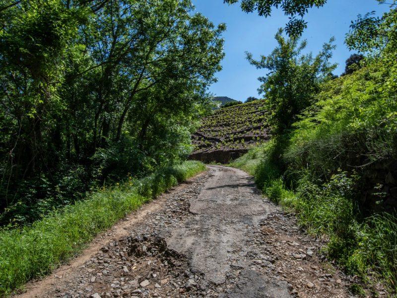 Chemin de vignerons