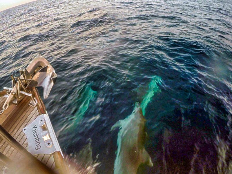 Voir des dauphins